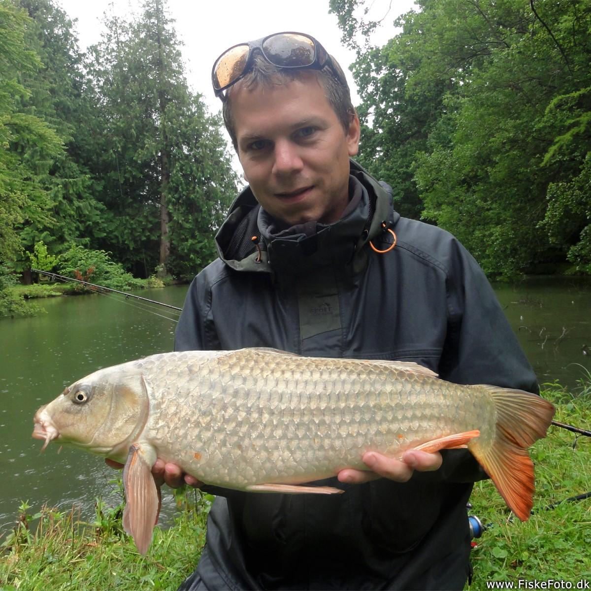 51a2f7dd8f8cd5 Koi karpe fiskeri i den silende regn. Fangstrapport fra Lolland ...